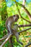Ein trauriger einsamer Affe sitzt auf einem Zaun im Schatten Lizenzfreies Stockfoto