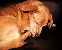 Ein trauriger Hund lizenzfreies stockfoto