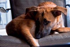 Ein trauriger Hund Stockbilder