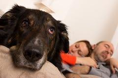 Ein trauriger Hund Lizenzfreie Stockfotografie