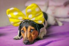 Ein trauriger Hund liegt auf der Couch Konzeptkrankheitssymptome stockfotos