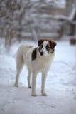 Ein trauriger Hund steht im Winter Stockfoto