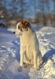 Ein trauriger Hund steht im Winter Stockbild