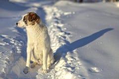 Ein trauriger Hund steht im Winter Lizenzfreies Stockbild