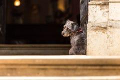 Ein trauriger Hund wartet auf den Eigentümer Lizenzfreies Stockfoto