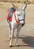 Ein trauriger schauender Esel auf dem Strand. Lizenzfreie Stockfotografie