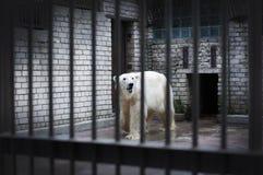 Ein trauriger und einsamer Eisbär, der in einem Käfig sich versteckt Lizenzfreie Stockfotos