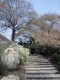 Ein Treppenhaus und Sakura im Central Park Stockfotografie
