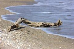 Ein trockener Baum auf dem Strand Stockbild