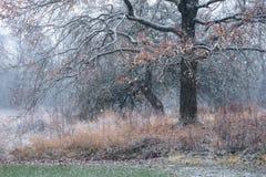 Ein trockener Baum bedeckt mit Schnee und ausgebreiteten Niederlassungen mit Überresten von nicht gefallenen Blättern Baum währen Stockfotos
