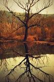 Ein trockener Baum in einer sumpfigen Landschaft Stockfotos