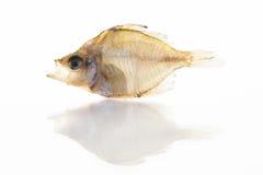 Ein Trockenfisch lokalisiert auf weißem Hintergrund Stockfotos
