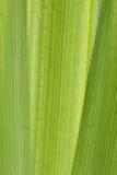 Ein tropischer abstrakter Hintergrund mit Palmen Stockfotos