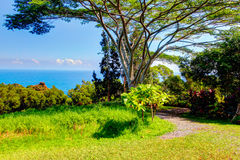 Ein tropischer Garten Garten Eden, Maui Hawaii Stockbild
