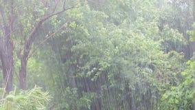 Ein tropischer Regenguß stock footage