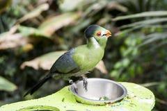 Ein tropischer Vogel Lizenzfreie Stockfotografie