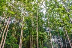 Ein tropischer Wald lizenzfreie stockfotografie