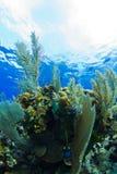 Ein tropisches Riff Stockbilder