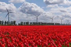 Ein typischer niederländischer Himmel über roten Tulpen und Windkraftanlagen lizenzfreies stockbild