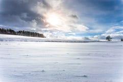 Ein unfruchtbarer Schnee bedeckte Land mit einigen Bäumen hier und, die dort gesehen wurden Lizenzfreie Stockfotografie