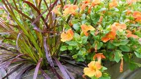 Ein varierty von Blumen im Garten Stockbilder