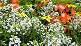 Ein varierty von Blumen im Garten Stockfotografie