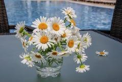 Ein Vase mit Gänseblümchen Lizenzfreie Stockfotos