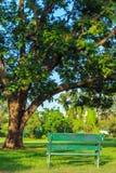 Ein vertikales Bild eine alte Bank auf Gras und großem Baumhintergrund Stockbild