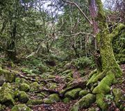 Ein verzauberter Wald stockfotos