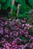 Ein violetter Blumenbauernhof lizenzfreie stockfotografie