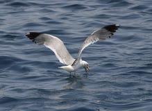 Ein Vogel über dem Meer Lizenzfreie Stockfotografie
