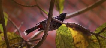 Ein Vogel stockbild