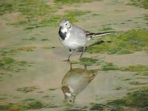 Ein Vogel stockbilder
