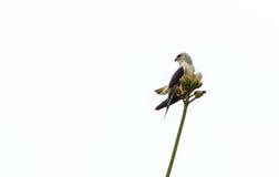 Ein Vogel allein auf Baum Stockfotografie
