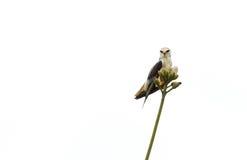 Ein Vogel allein auf Baum Lizenzfreie Stockbilder