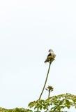 Ein Vogel allein auf Baum Lizenzfreie Stockfotos