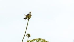 Ein Vogel allein auf Baum Stockfoto