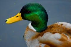 Ein Vogel aller Farben stockfotos