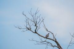 Ein Vogel an auf dem Baum Lizenzfreies Stockbild