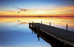 Ein Vogel auf dem See Stockbild