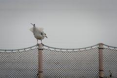Ein Vogel auf dem Zaun Lizenzfreie Stockfotografie