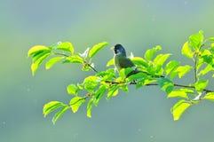 Ein Vogel auf einem Obstbaum Stockbild
