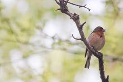 Ein Vogel auf einer Niederlassung eines Baumprofils, Blick Lizenzfreie Stockfotos