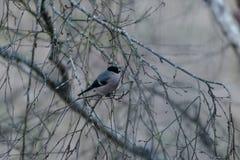 Ein Vogel auf einer Niederlassung eines trockenen Baums Stockbild