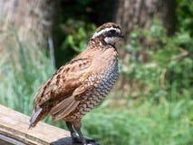 Ein Vogel auf einer Schiene Stockfotos