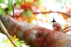 Ein Vogel auf Niederlassung Lizenzfreies Stockbild