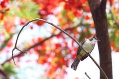 Ein Vogel auf Niederlassung Stockbild