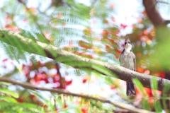 Ein Vogel auf Niederlassung Lizenzfreies Stockfoto
