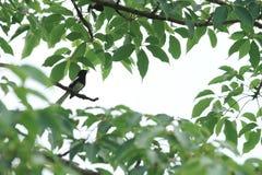 Ein Vogel auf Niederlassung Lizenzfreie Stockfotos