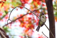 Ein Vogel auf Niederlassung der dubble Belichtung Lizenzfreie Stockfotos